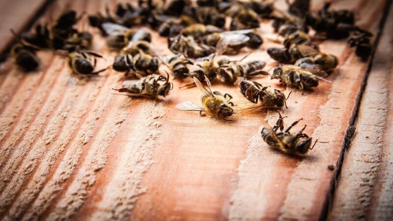 dead bees on wooden board