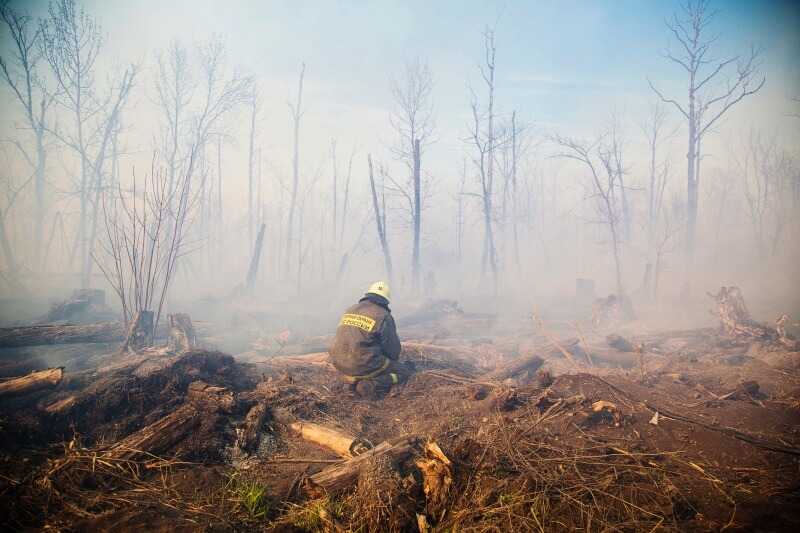 fireman after forest fire evaluating damage